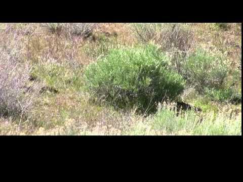 Farm Pest Hunt - Crosman Benjamin Discovery & Predator Pellets