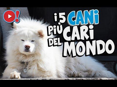i 5 cani più cari del mondo