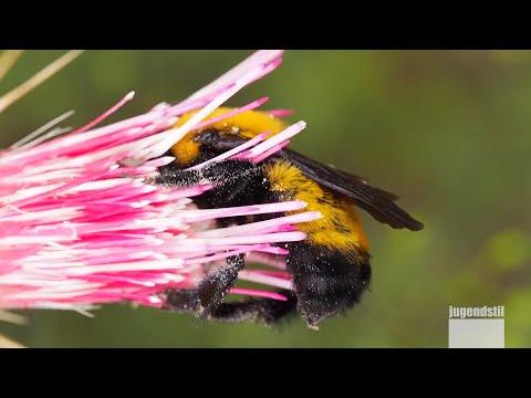 Summ Summ! Ein neues Heim für Bienen in Magdeburg | J ...