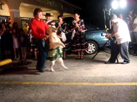 Dog doing the Merengue