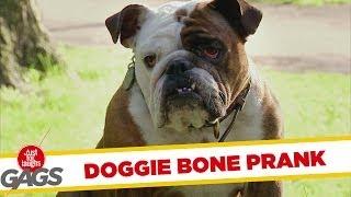 Teleporting Dog Bone Prank
