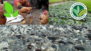 Nhà nông làm giàu | Nuôi gà, thả cá, trồng rau: Chàng trai 96 thu về chục triệu mỗi tháng