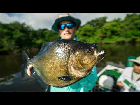 DEADLY PIRANHA Catch and Cook in the AMAZON Jungle!!! (EPIC) - Thời lượng: 15 phút.