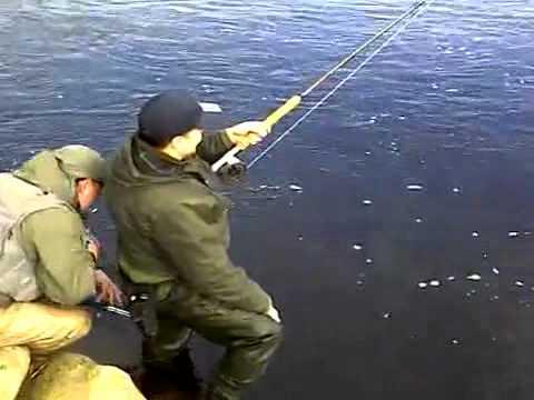 весенняя ловля жереха на спиннинг видео