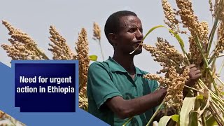 Ethiopia's farmers urgently need seed to withstand El Niño drought impacts.