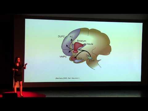 El Cerebro- La Ultima Frontera