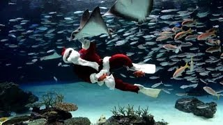 Santa Claus swims with fish in Tokyo
