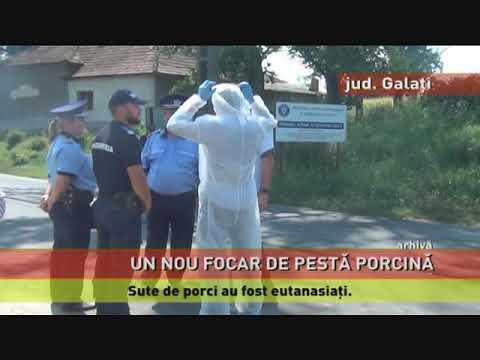 Un nou focar de pestă porcină, în județul Galați