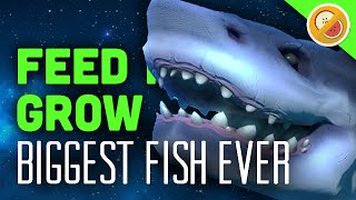 Biggest fish ever feed and grow gameplay 1 funny for Feed and grow fish online