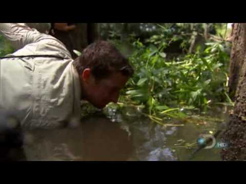 bear grylls - Bear Grylls is using his hand to