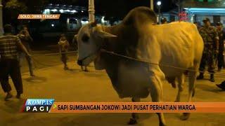 Video Ketika Sapi dari Jokowi Jadi Pusat Perhatian Warga MP3, 3GP, MP4, WEBM, AVI, FLV Agustus 2019