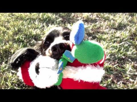 FinetunedCanines - Cute Christmas movie with dogs - teaser for upcoming movies from FINE-TUNED CANINES http://www.Fine-tunedCanines.com More movies: http://www.fine-tunedcanine...