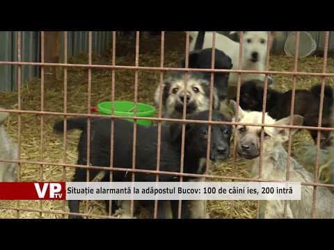 Situație alarmantă la adăpostul Bucov: 100 de câini ies, 200 intră