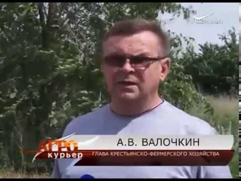 """В Большой Глушице прошла выставка """"Степная лоза"""""""