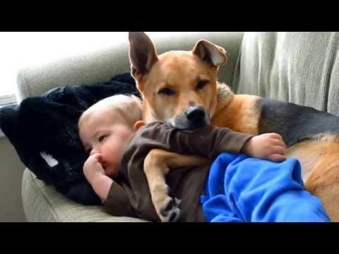 bimbo è ammalato: guardate come lo consola il cane! incredibile!