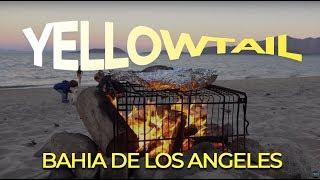 One of the best beach camp spot in Baja California! Une journée incroyable à camper sur le bord de la mer de Cortez! Yellowtail sur le feu comme dans l'temps!