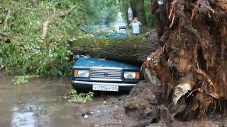 Подборка Деревья против автомобилей