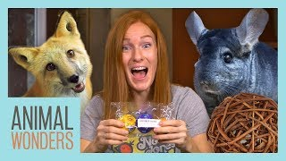Unboxing Animal Toys! by Animal Wonders