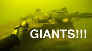 River Treasure: GIANT Catfish Edition!!!
