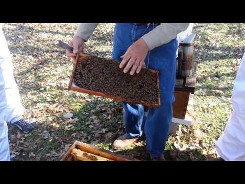 Beekeeping Basics: Class Highlights