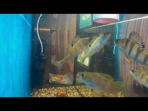 Почему умирают рыбки в аквариуме и 64