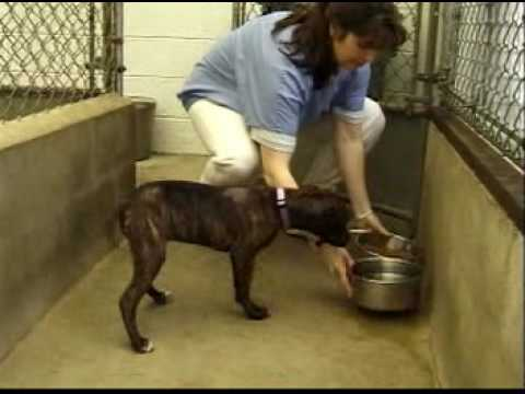 Occupation Overview Veterinaryanimal Control Workers | Animal Control Workers Jobs Made Real