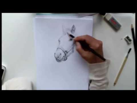 Tierportrait: Pferd TimeLapse / Zeitraffer Zeichnung / Sketch Pony / Horse by J. Metzen
