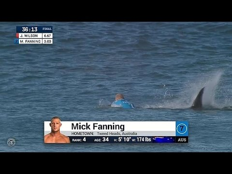 WSL : Mick Fanning attacked by shark