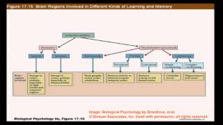 Brain And Behavior - Learning And Memory: Basic Distinctions II