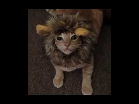 Just For Fun: Pet Halloween Costumes