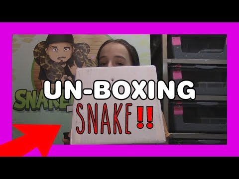 UN-BOXING | SNAKE | Girls Reaction Is EPIC!!!