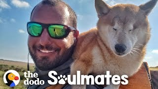 Guy Carries His Blind Dog 800 Miles To Help Get Her Confidence Back | The Dodo Soulmates by The Dodo