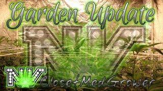 Garden Update 8/17/18 by  NVClosetMedGrower