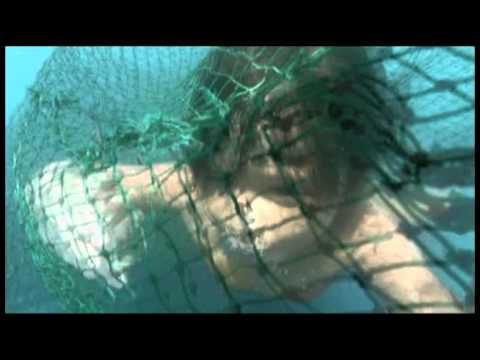 DYESEBEL Episode : Liro Saves Dyesebel