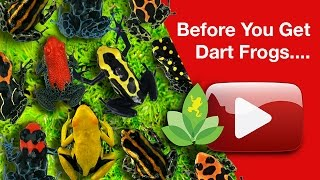 Before You Get Dart Frogs