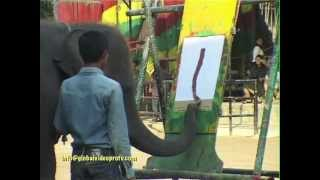 ELEPHANT PAINTING WITH TRUNK!!! PATTAYA, THAILAND....TRAVEL, CULTURE