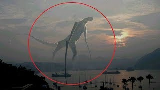Video 5 Mysterious Creatures Caught on Camera MP3, 3GP, MP4, WEBM, AVI, FLV Juli 2018
