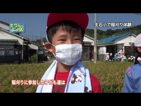 たうんニュース2017年10月「生石小学校 稲刈り体験」