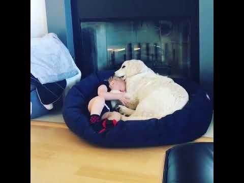 Hund als Babysitter