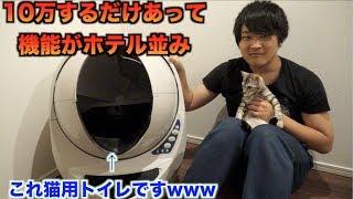 Video 10万円の猫用トイレがホテルみたいな機能ついてたんだけど・・・ MP3, 3GP, MP4, WEBM, AVI, FLV Mei 2018