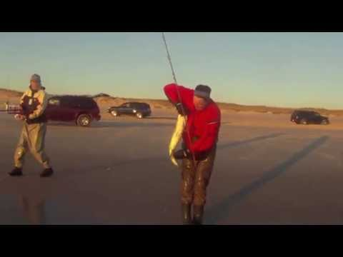 Striper Surfcasting Thanksgiving 2011 – IBSP