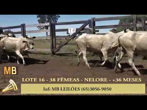 187º LEILÃO VIRTUAL MB LEILÕES