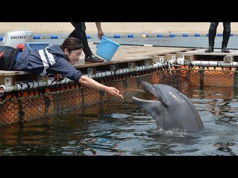 須磨海水浴場にイルカ移送