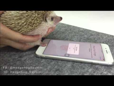 Hedgehog s Paw Unlocks iPhone