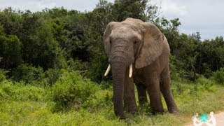 Addo South Africa  city pictures gallery : ADDO ELEPHANT PARK SAFARI, SOUTH AFRICA