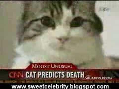 Cat predicts death Grim 'pussy' Reaper's