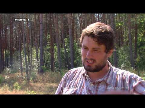 Чому горять ліси Рівненщини? [ВІДЕО]