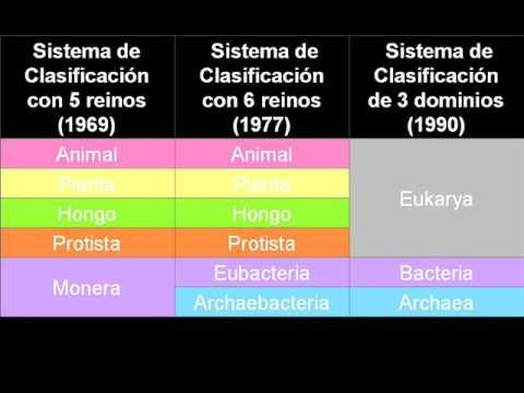 Vídeos Educativos.,Vídeos:Taxonomía