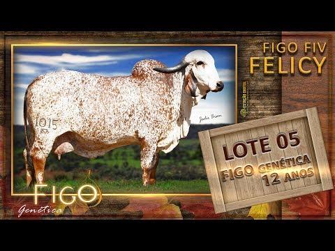 LOTE 05 - FIGO FIV FELICY