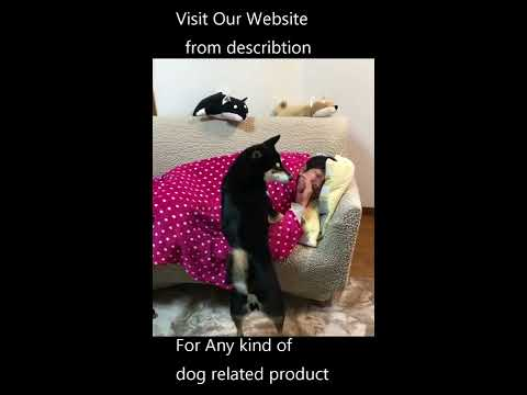 Video Dogging videos Whitney wisconsin dog video download in MP3, 3GP, MP4, WEBM, AVI, FLV January 2017